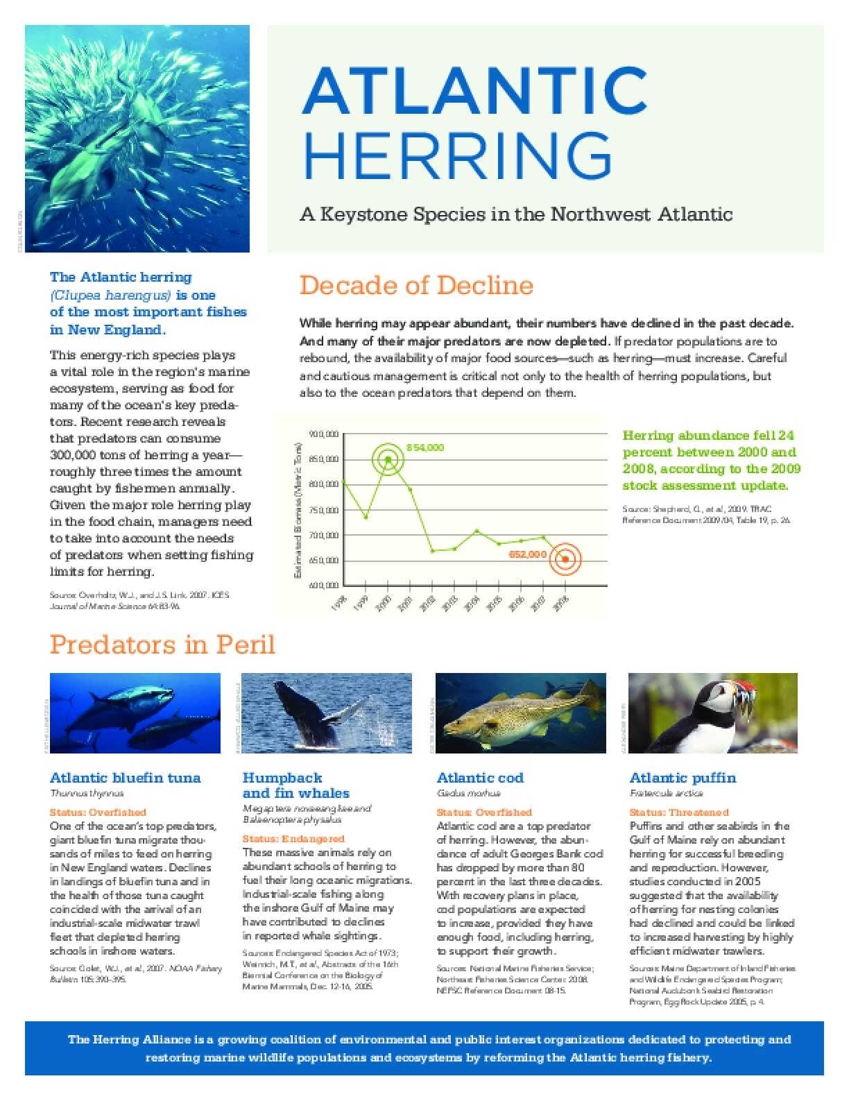 Atlantic Herring - A Keystone Species in the Northwest Atlantic