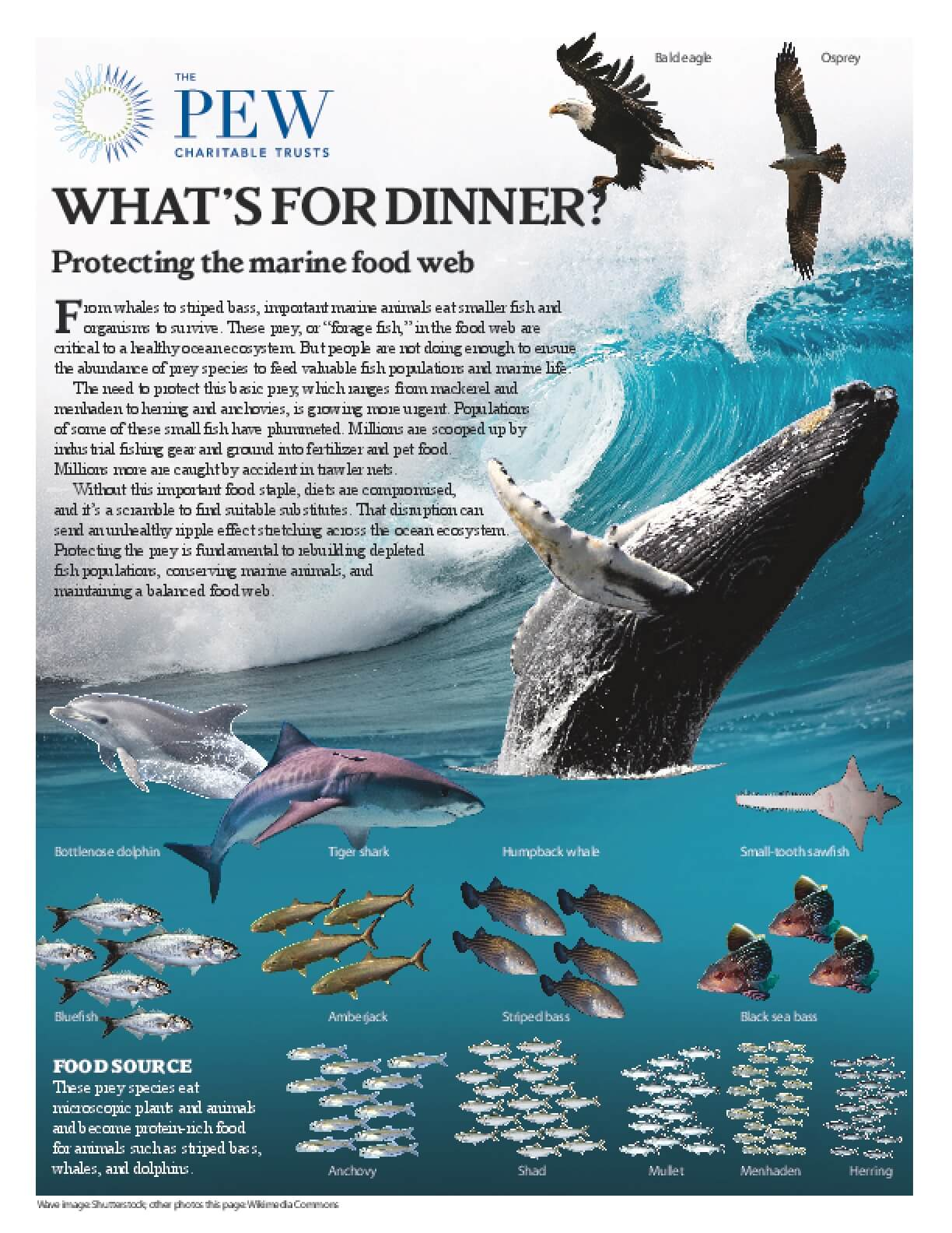 What's for Dinner? Protecting the Atlantic Ocean Marine Food Web