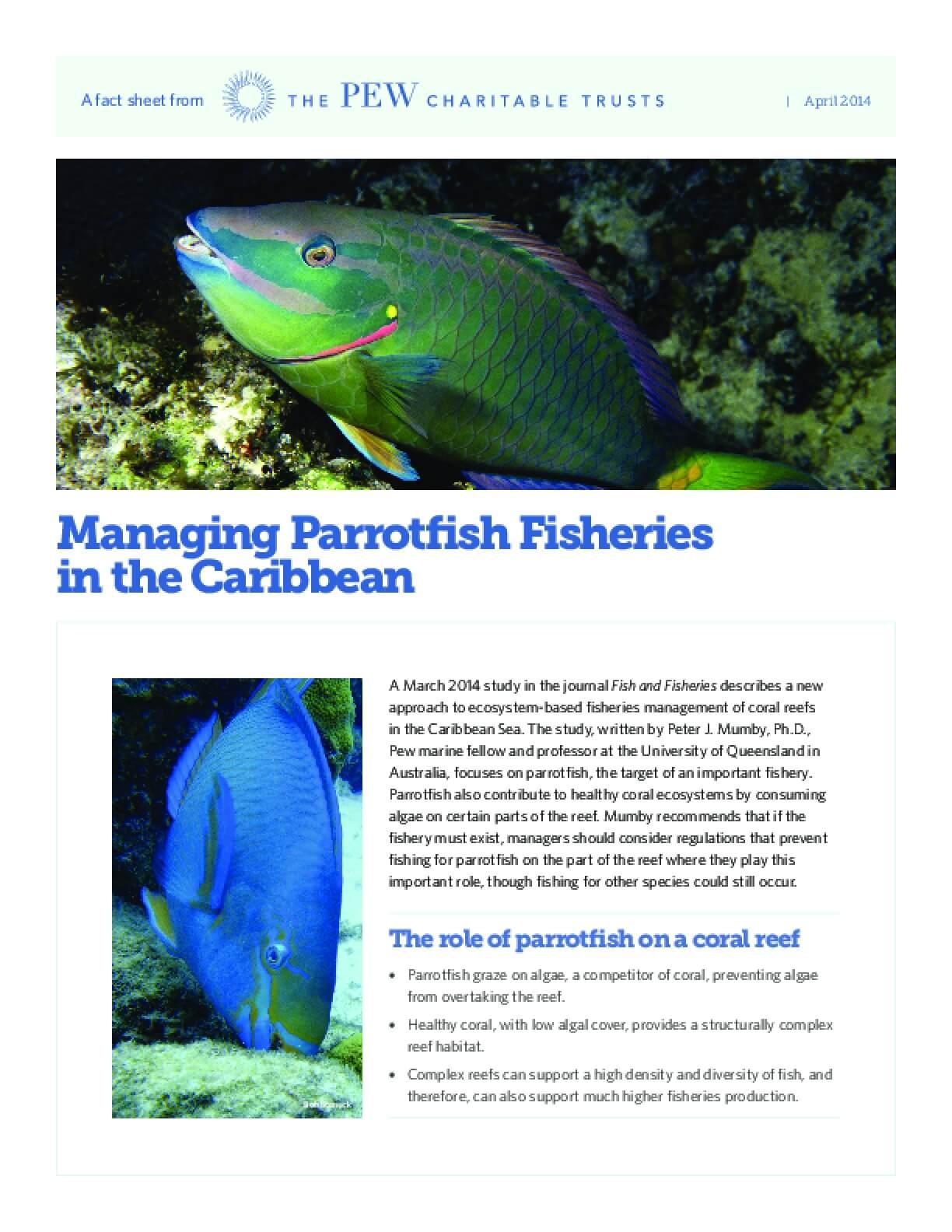 Managing Parrotfish Fisheries in the Caribbean