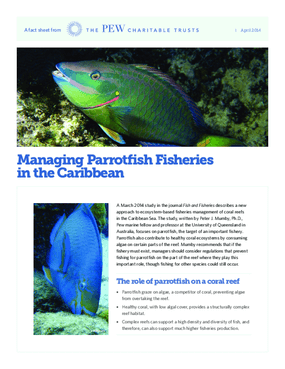 Managing Parrotfish Fisheries in the Caribbean